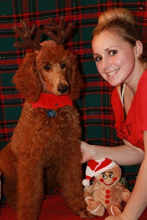 Stud dog Caboose wearing costume reindeer antlers sitting next to one of our staff members, Heather in front a green and red background. Between them is a stuffed gingerbread man wearing a holiday hat